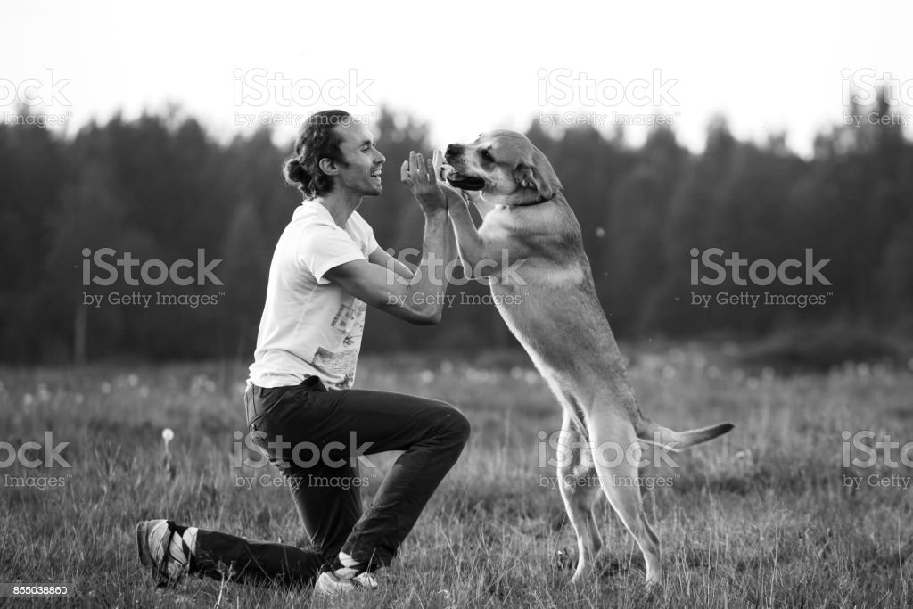 Owner with dog on field stock photo