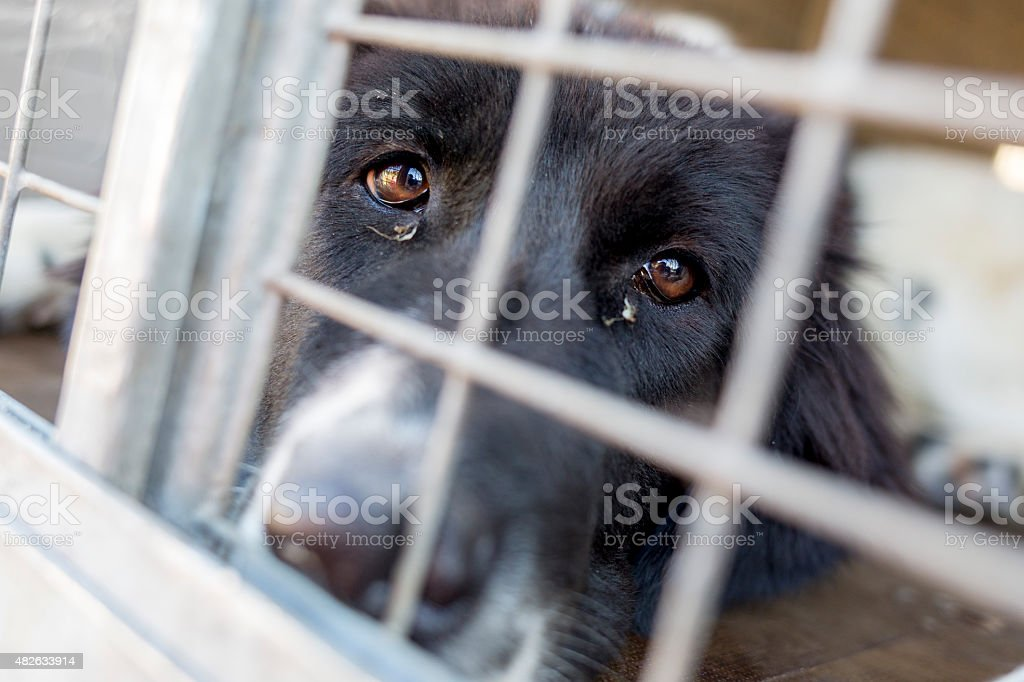 Ownerless dog in a cage Homeless and ownerless sad dogs are kept in cages. 2015 Stock Photo