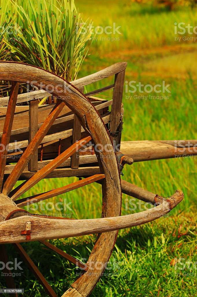 Ox Cart in Rice Field stock photo