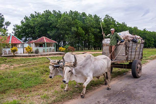 Ox cart on a road in Cuba - foto de stock