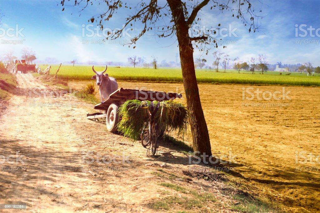 Ox Cart ! stock photo