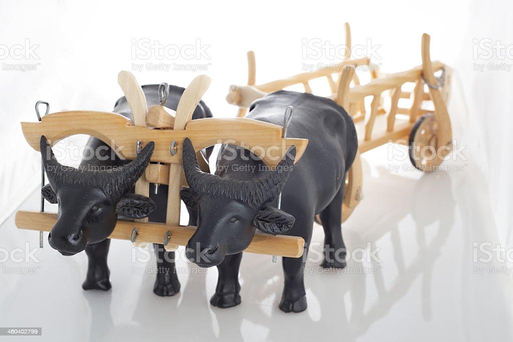 ox stock photo