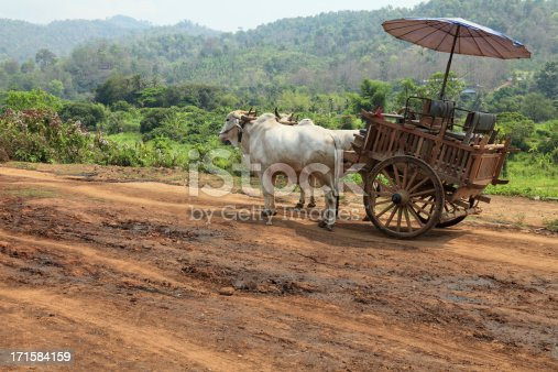 istock Oxcart in Thailand 171584159