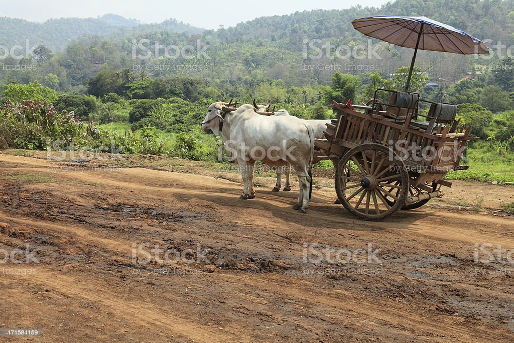 Oxcart in Thailand stock photo