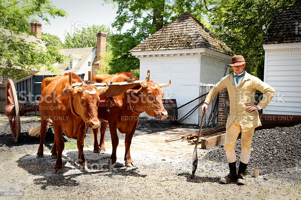 Oxen handler stock photo