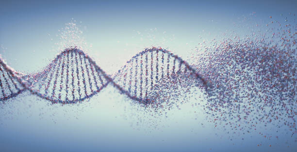 Oxidative DNA Damage Genetic Disorder Molecular Structure Genetic Syndrome and Genetic Disorder, 3D illustration of science concept. Colorful DNA molecule. dna stock pictures, royalty-free photos & images