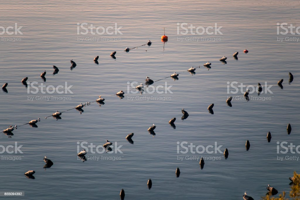 Oyster and mussel cultivation in blue sea stock photo