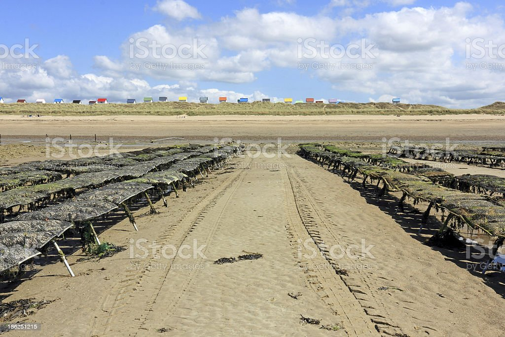 Oyster beds and beach huts stock photo