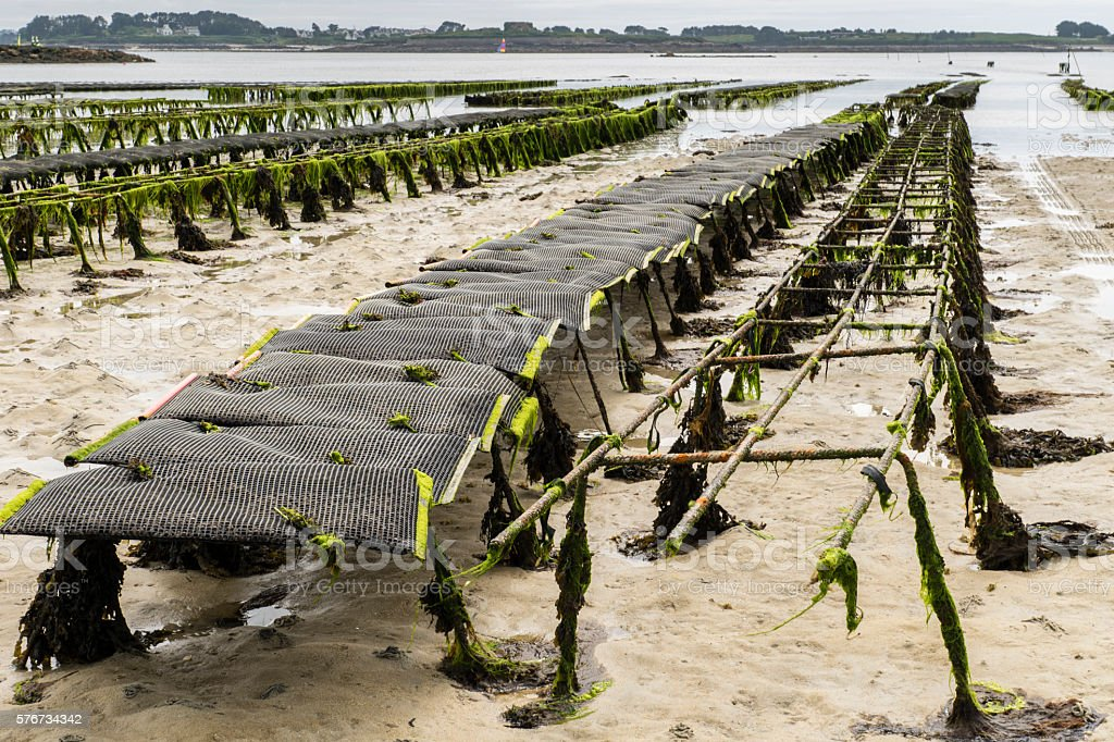 Oyster beds at Lilia Plouguerneau in Brittany stock photo
