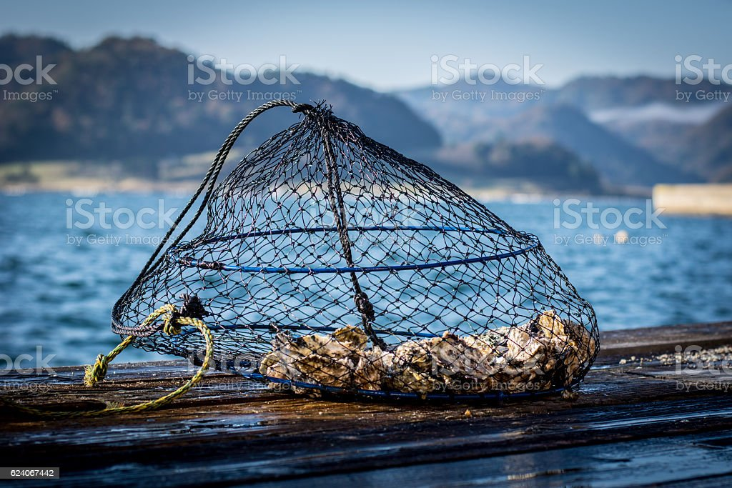 Oyster Cultivation Cage in Kumihama bay, Japan. stock photo