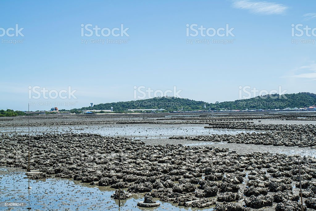 Oyster farm Ban Ang Sila, stock photo