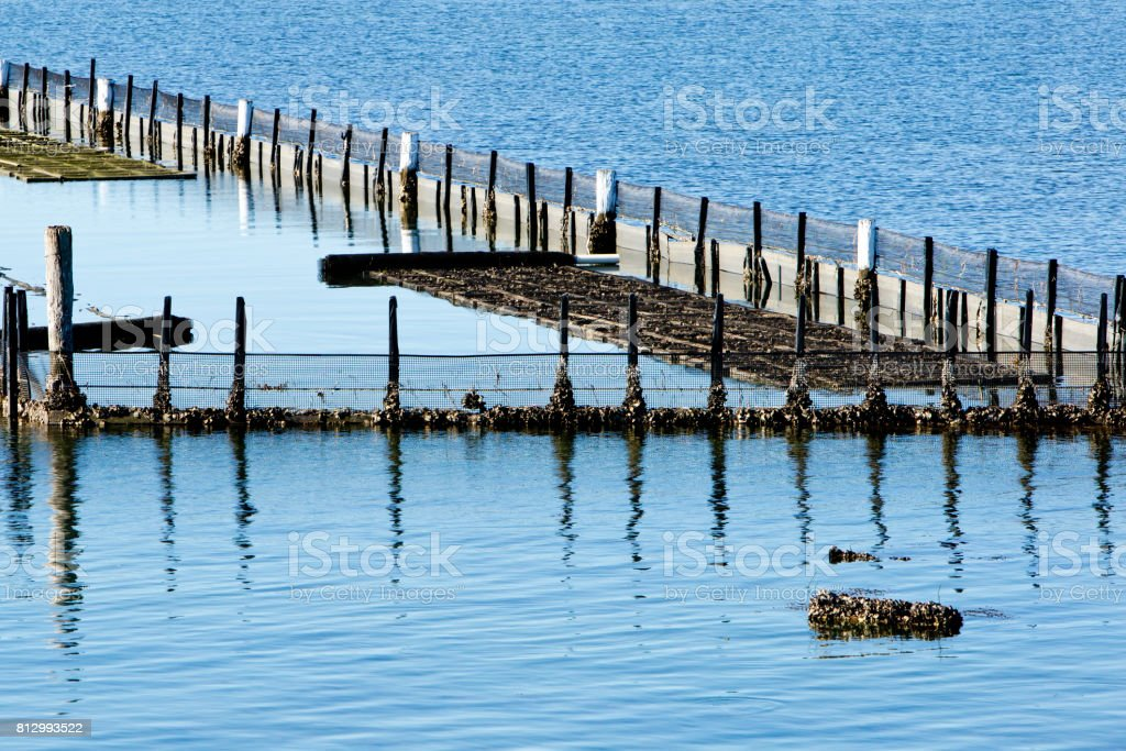 Oyster Farm Beds in water stock photo