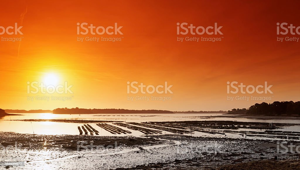 oyster farm in Brittany stock photo