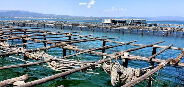 Granja de ostras en el Delta del Ebro - foto de stock