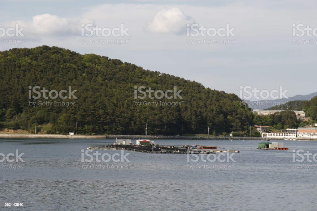 Oyster farm in the sea royalty-free stock photo