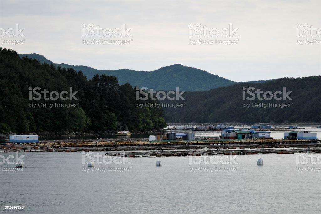 Granja de ostras en el mar foto de stock libre de derechos