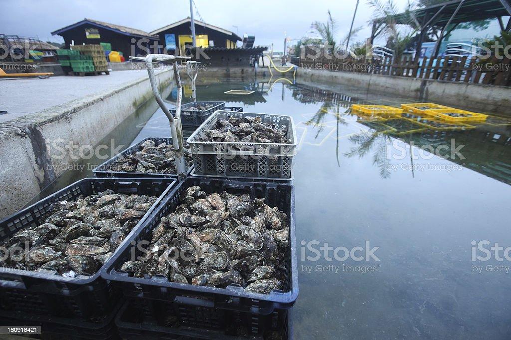 Oyster farm - Photo