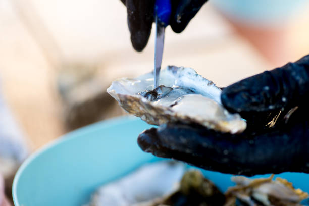 oyster is opened and cut with a special knife stock photo