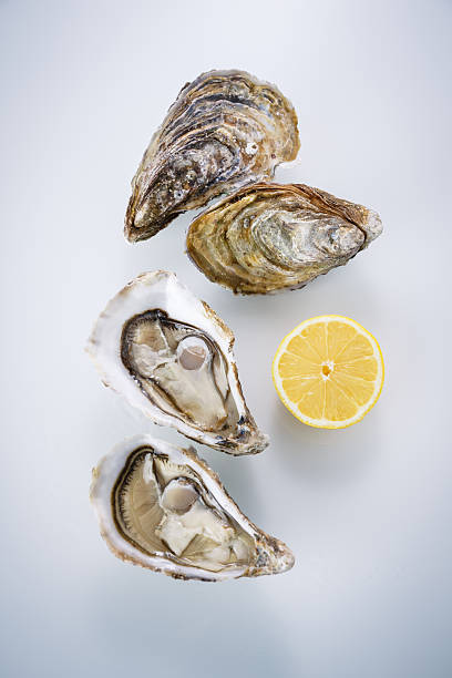 oyster isolated on white background - oyster stock pictures, royalty-free photos & images
