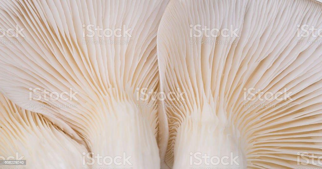 Oyster mushroom gills macro stock photo