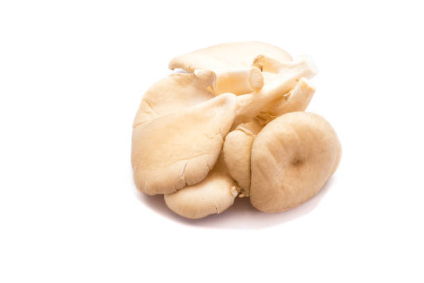 Oyster mushrooms isolated on white background Oyster mushrooms isolated on white background mushrooms: oyster mushrooms isolated on white background stock pictures, royalty-free photos & images