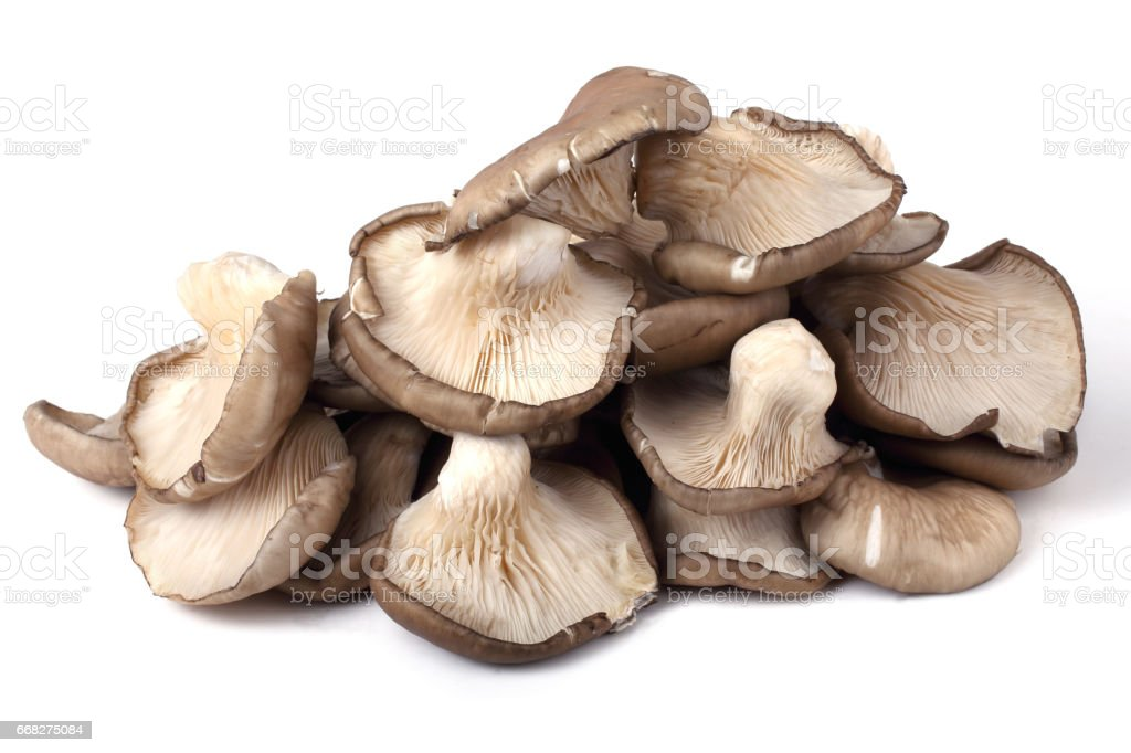 Oyster mushrooms foto stock royalty-free