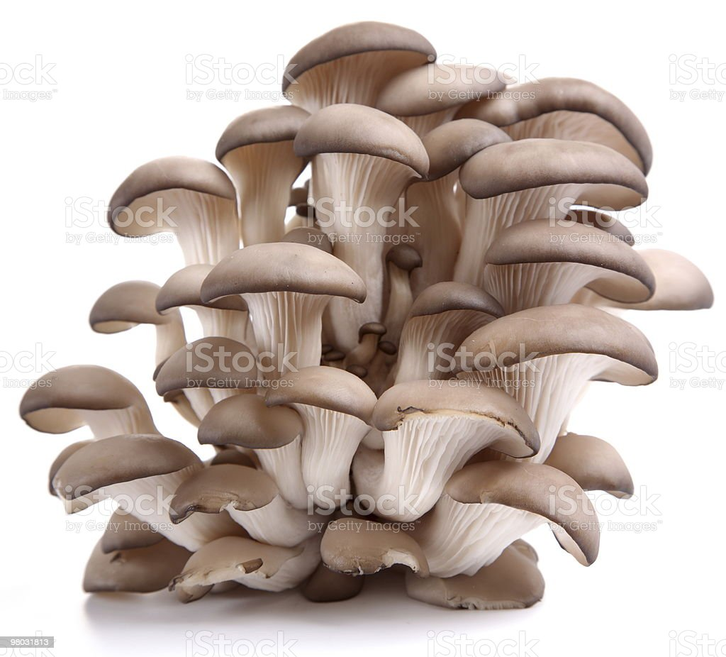 Oyster mushrooms royalty-free stock photo