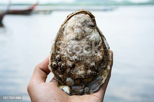 Oyster on hand