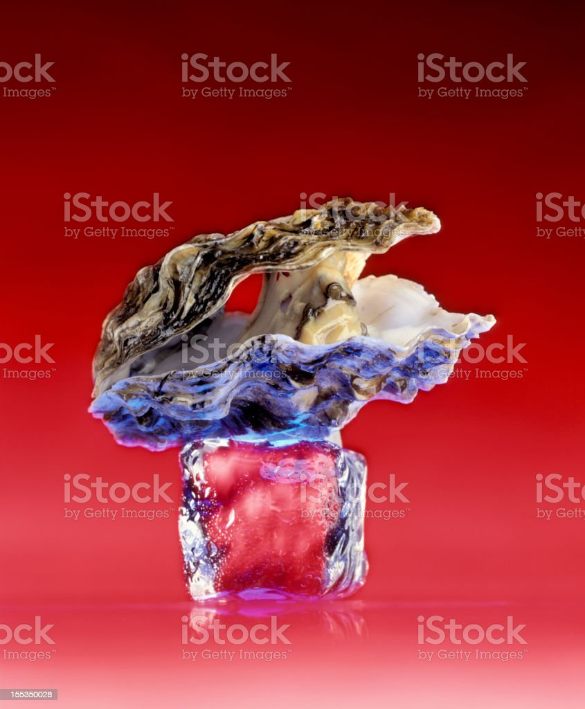 oyster on ice cube royalty-free stock photo