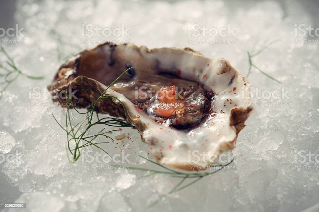 Oyster on the ice stock photo