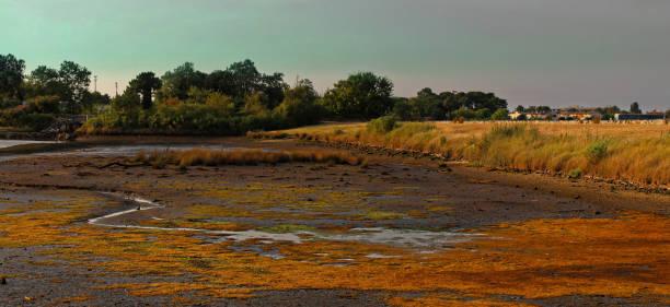 Oyster park countryside in La teste de Buch