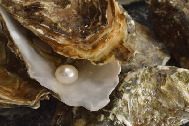 Oyster pearl imitation sambol Oyster pearl imitation symbol mollusk stock pictures, royalty-free photos & images