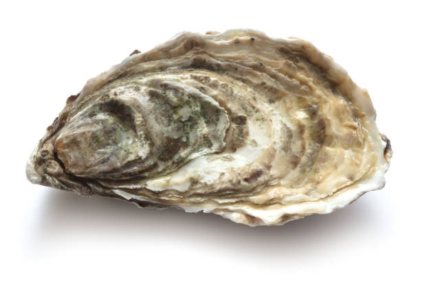 oyster - oyster stock pictures, royalty-free photos & images