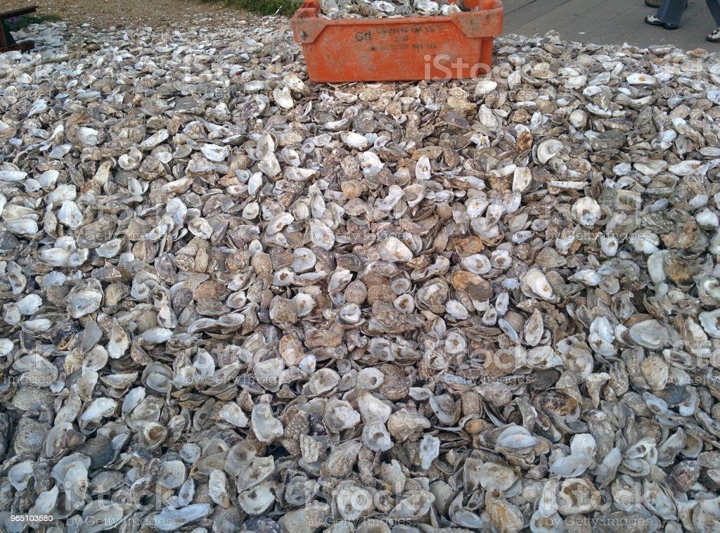 Oyster Shells zbiór zdjęć royalty-free