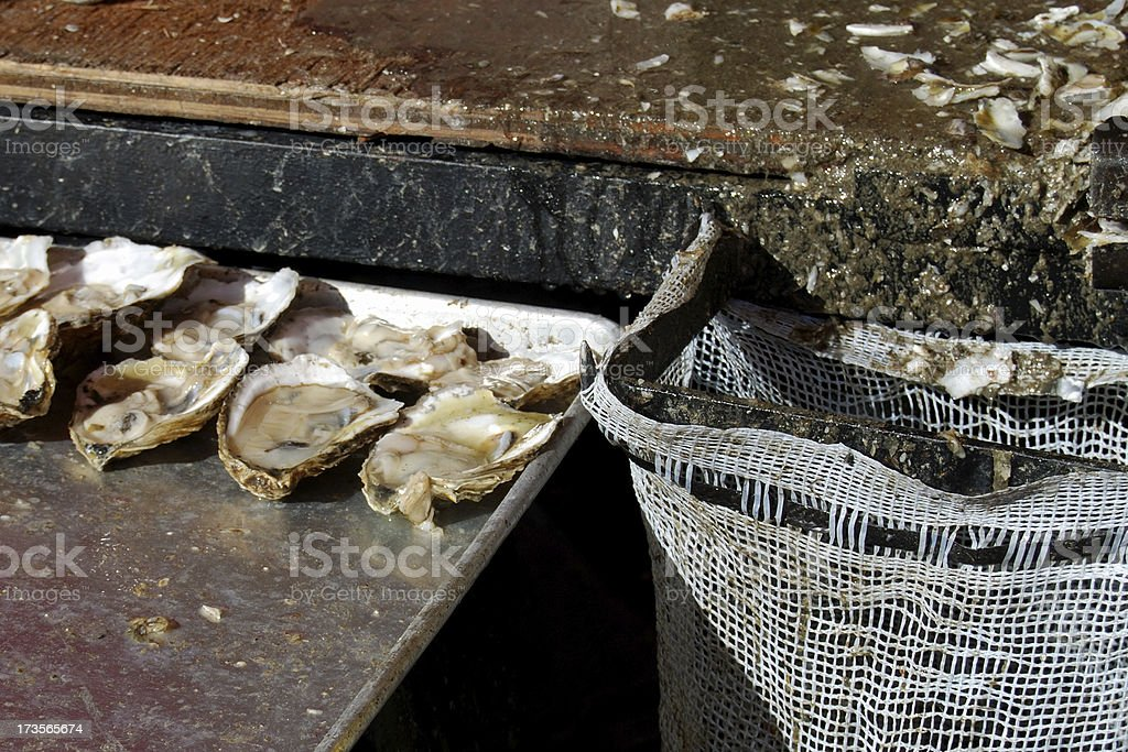 Oyster Shucking Table royalty-free stock photo
