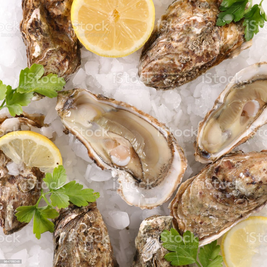 oyster with parsley and lemon royalty-free stock photo