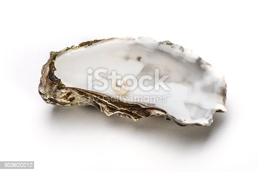 Oyster with Pearl on white