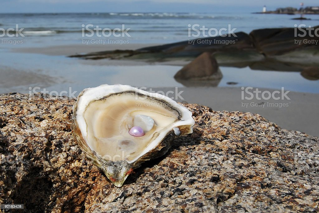 Oyster with Pink Pearl stock photo