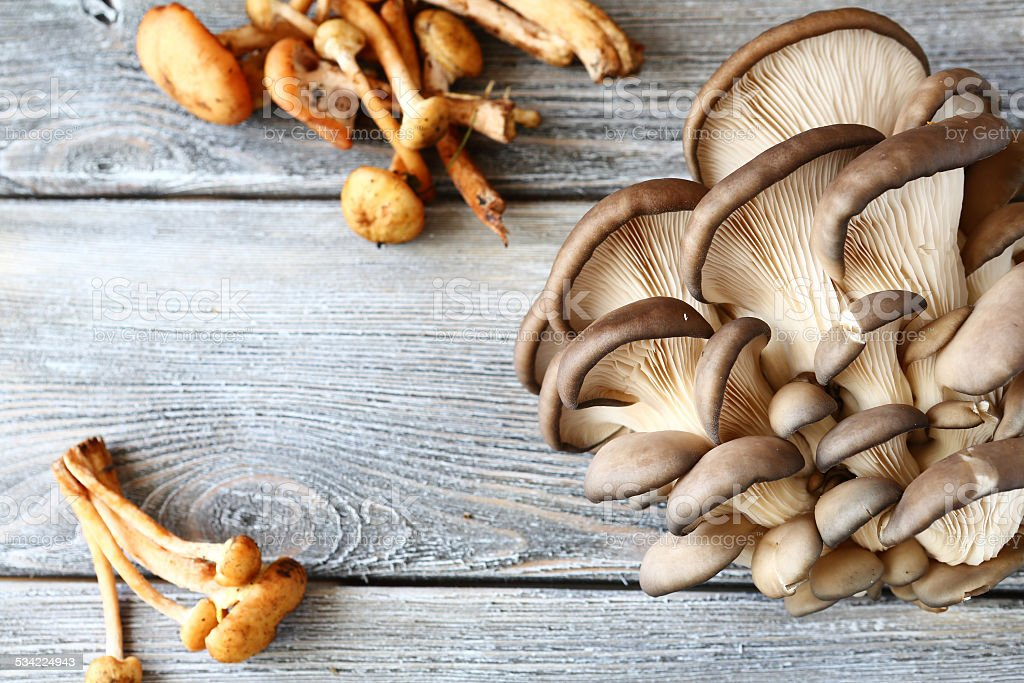 Oysters and honey mushrooms on the boards stock photo