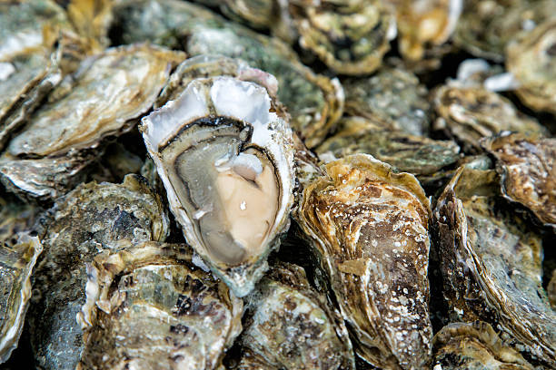Oysters background with Open Oyster Close up oysters background with Open Oyster mollusk stock pictures, royalty-free photos & images