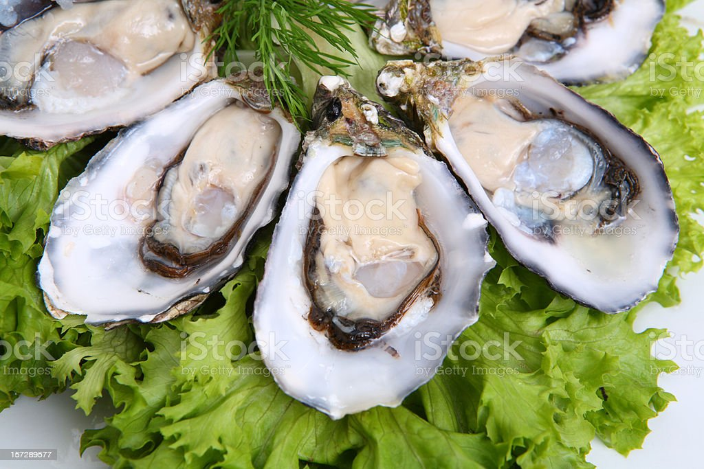 Oysters close up stock photo