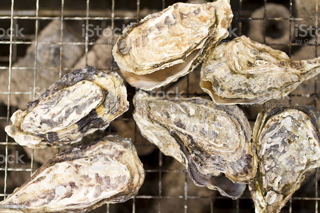 Oysters Cooking on a Charcoal Grill royalty-free stock photo