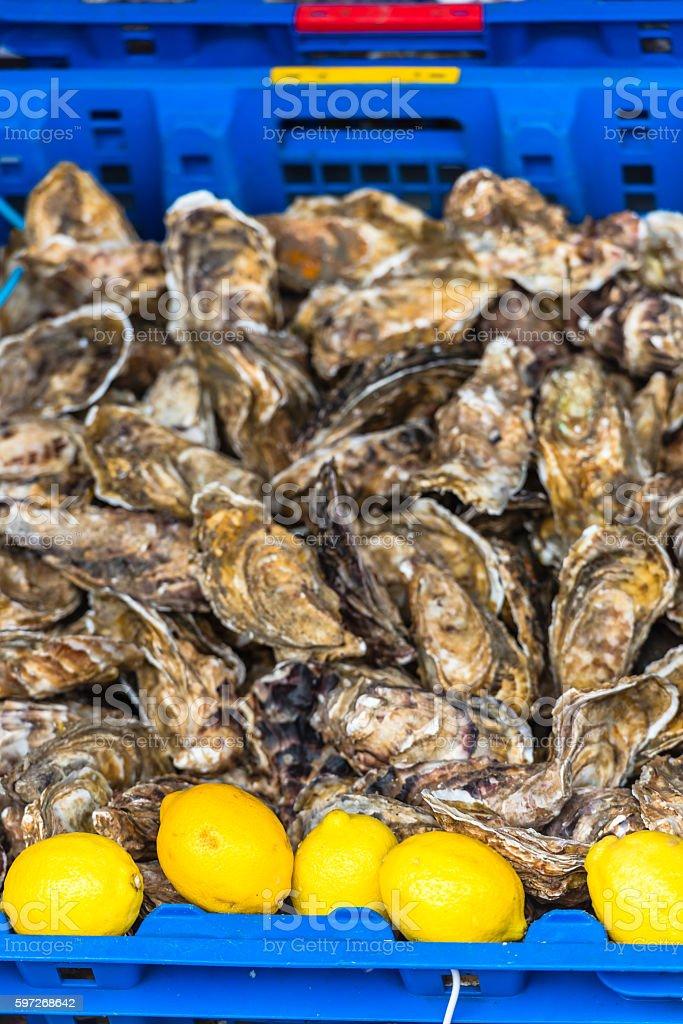 Austern Markt in Cancale, Frankreich Lizenzfreies stock-foto