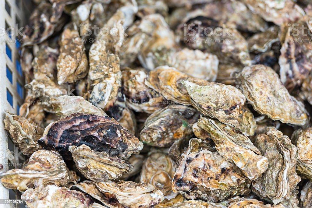 Huîtres marché Cancale, en France photo libre de droits