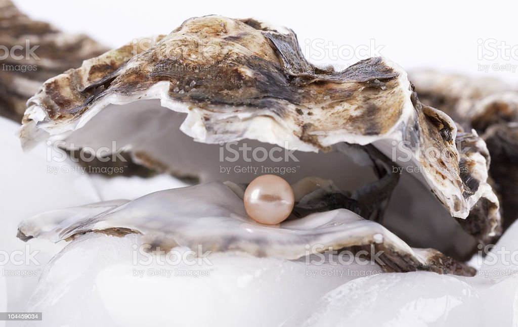 Oysters on ice royalty-free stock photo