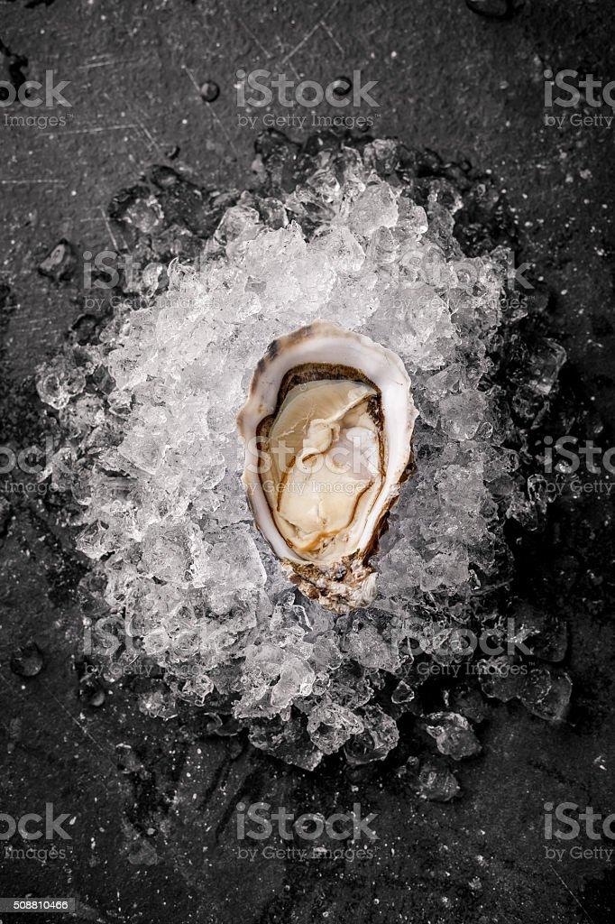 Austern auf Eis – Foto