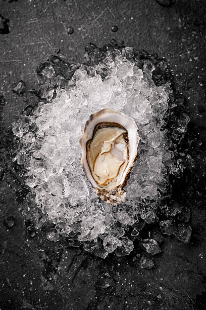 oysters on the ice - oyster stock pictures, royalty-free photos & images