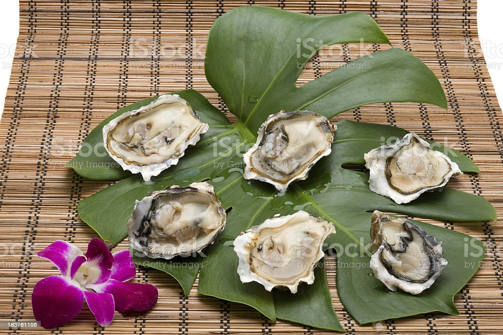Oysters on tropical leaf stock photo