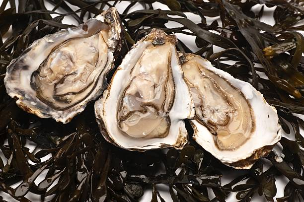 Best Oysters On The Half Shell Stock Photos, Pictures ...