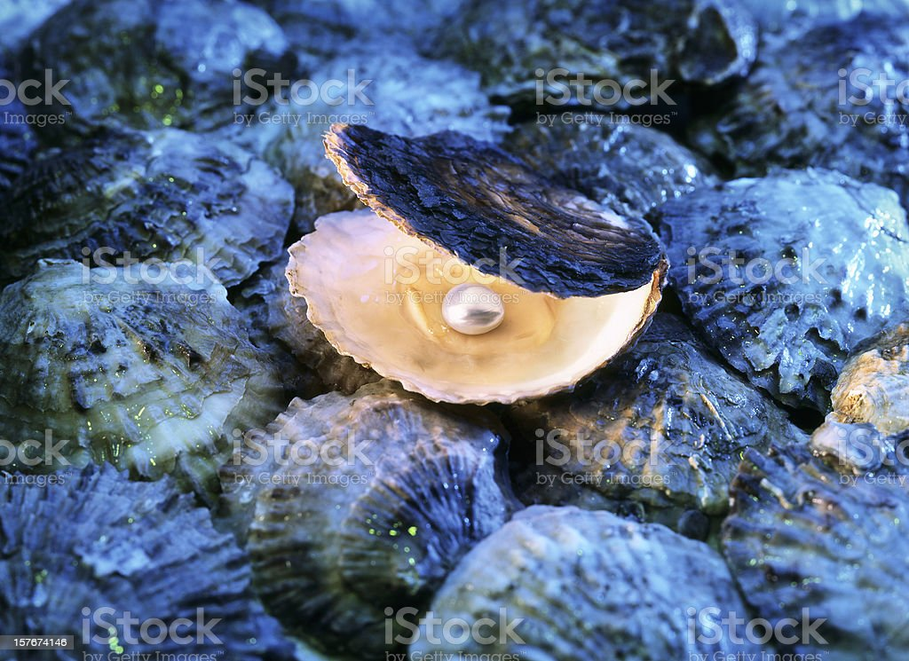 Oysters with pearl stock photo